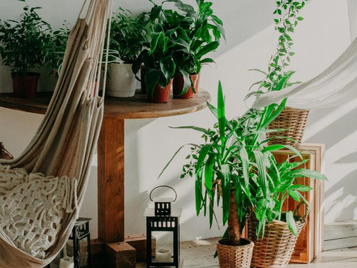 Plantas de apartamento: 11 espécies ideais para cantinhos com pouca luz