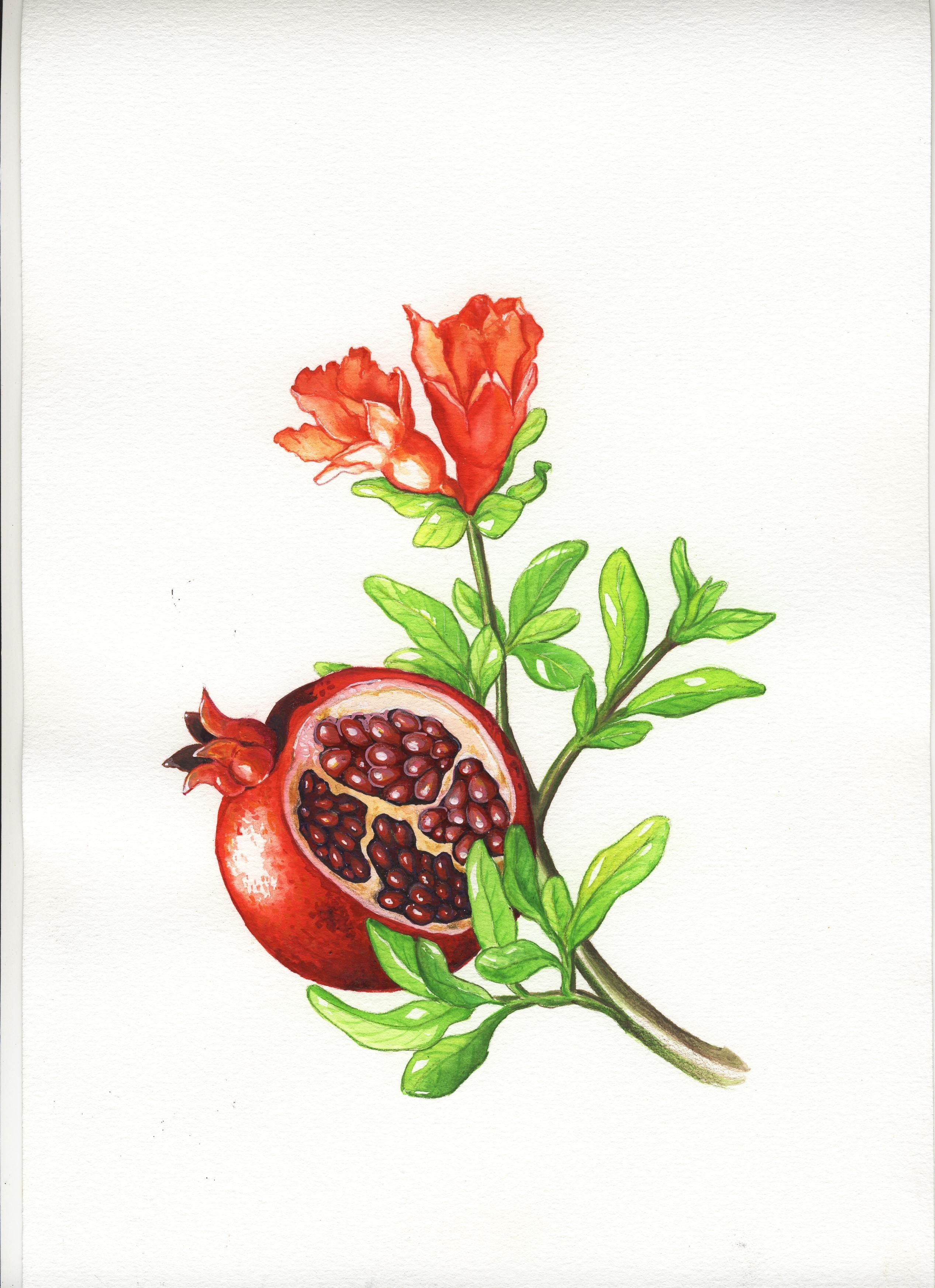 Granatapfel fertig