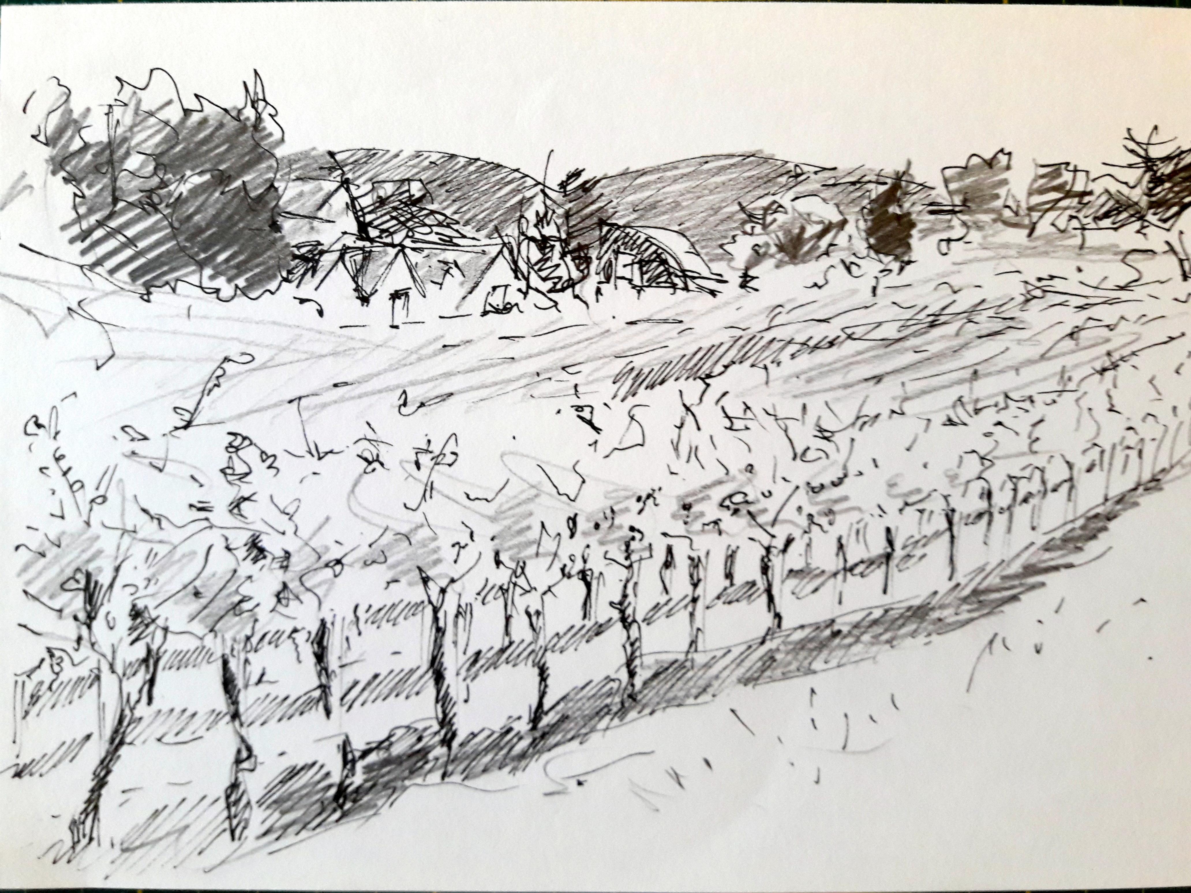 Weingärten 1