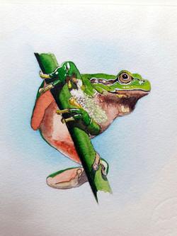 Laubfrosch - Naturschutzmemo