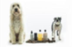 Runway Dogs Models Puppies Fashion Week