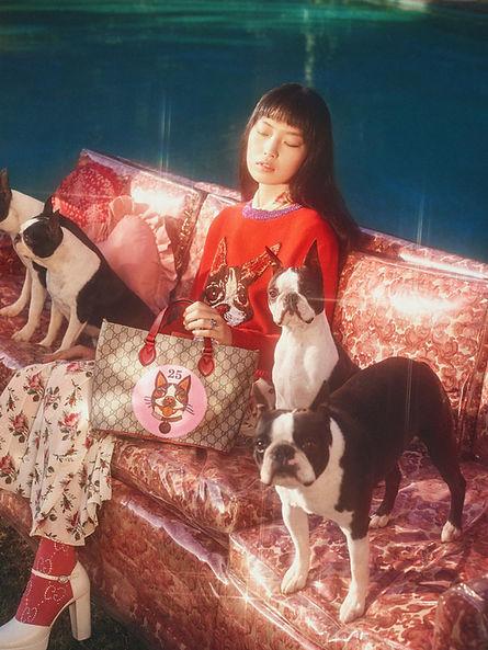 Gucci Boston Terriers
