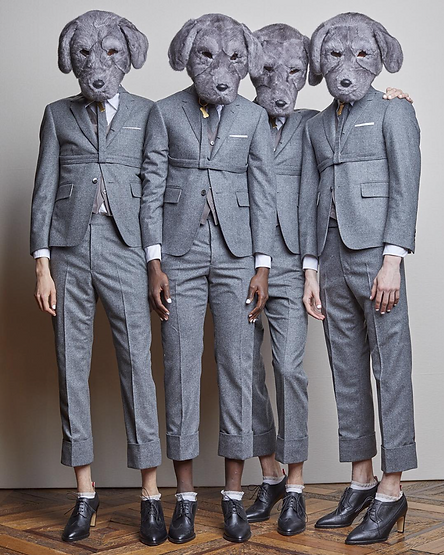 grey cashmere suits dog heads