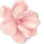 Blossom 4_4x.png