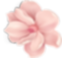 blossom 2_4x.png