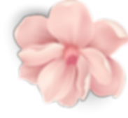 blossom 3_4x.png