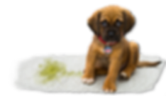 home page puppy BETTER1019.png