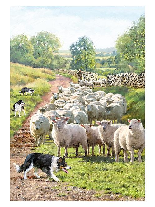 MOVING THE SHEEP - HAPPY BIRTHDAY 10627