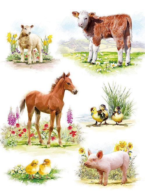 YOUNG FARM ANIMALS - HAPPY BIRTHDAY 10516