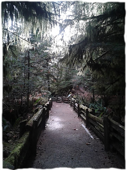 Cathedral grove.png