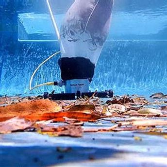 bottom feeder pool cleaning.jpg