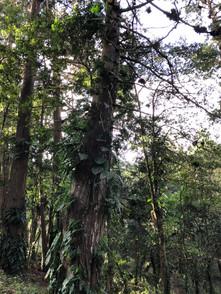 Bosque 5