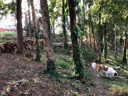 Bosque 7