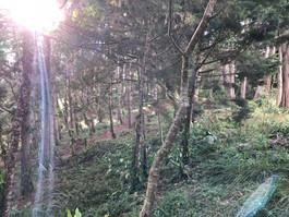 Bosque 8