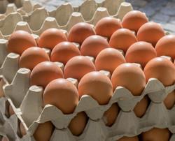 B07C55X4LS - 30-Count Egg Flats (18 Trays) 2