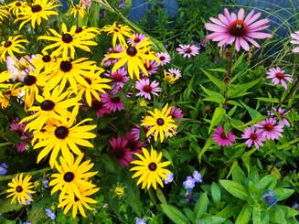 herbaceous border.jpg