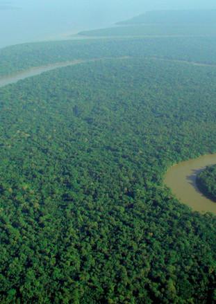 Amazonian Rainforest nearly Unrecoverable