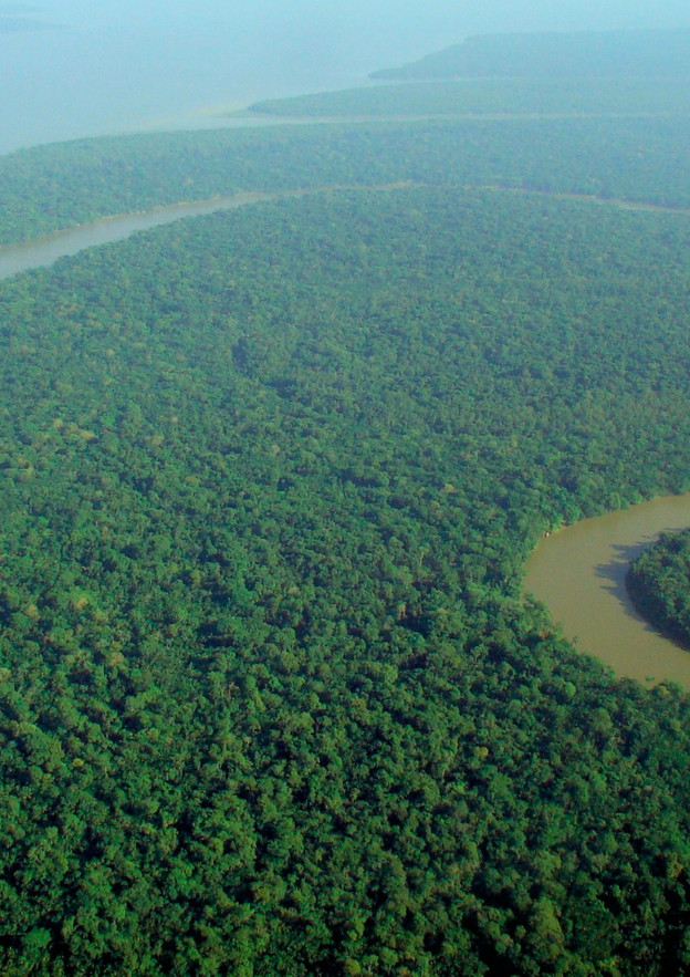 Amazonian Rainforest nearly Unrecoverable