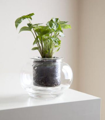 """Flora & Co Self Watering """"Cup O Flora"""" Vessel (Small)"""