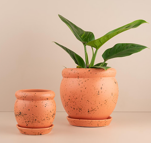 Orange Cutie Patootie Pots By Urban Diddle