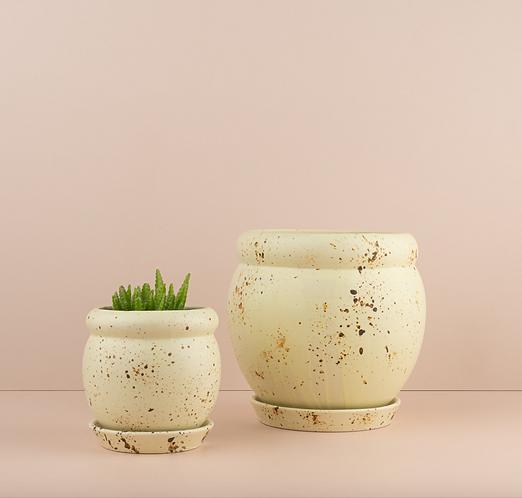 Lemon Cutie Patootie Pots By Urban Diddle