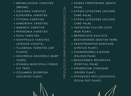 Houseplant 101: Our Favourite Pet-friendly Indoor Plants
