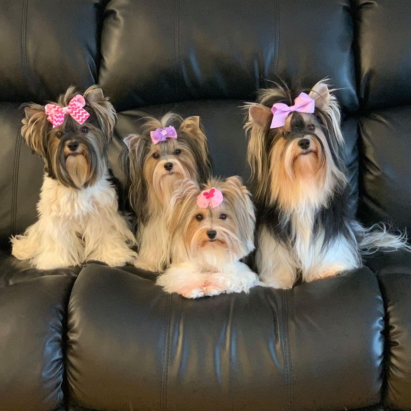Alice,Hayden,Dee,Vicky
