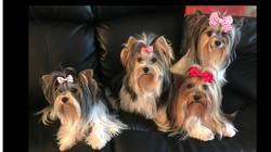 Hayden,Dee,Loulou,Bonita