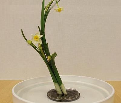12月の花:水仙(スイセン)