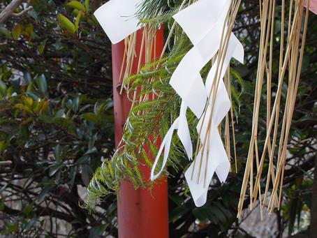 12月の花:歯朶(ウラジロ)