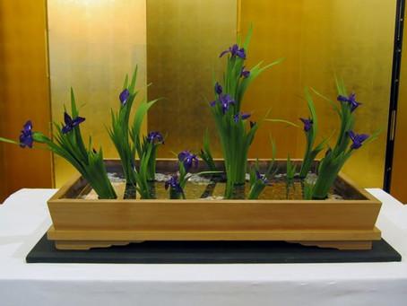 3月の花:杜若(カキツバタ)