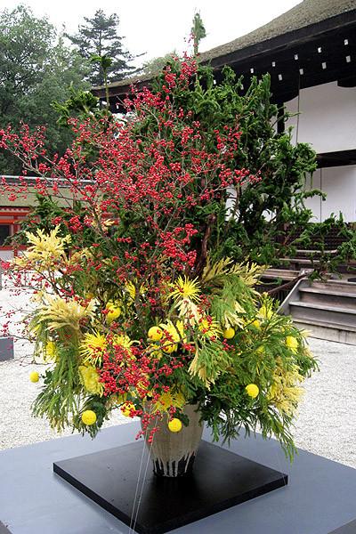flower_kiku01.jpg