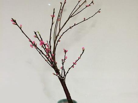 3月の花:桃(モモ)