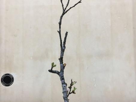 2019年4月のコラム 住空間の花