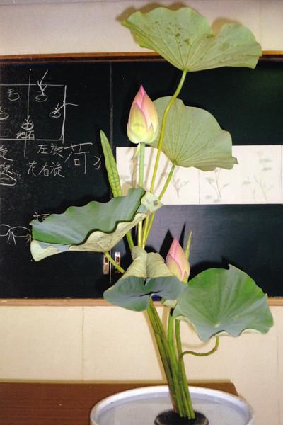 flower_lotus01.jpg