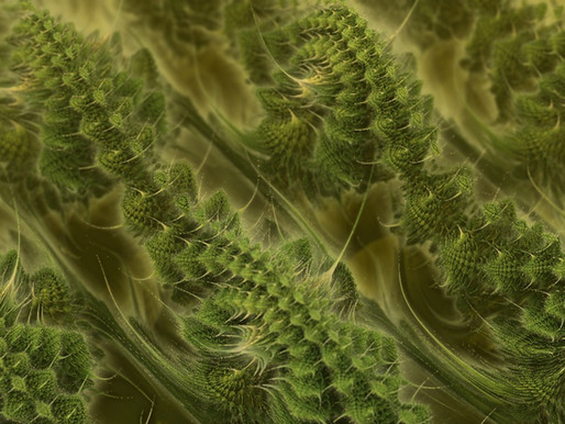 What are Fractals? The art of science...