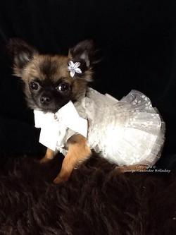 Georgie's tiny girl