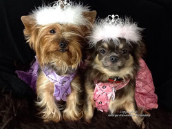 Georgie's princesses