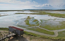 350px-Rye_Harbour_Nature_Reserve_wader_p