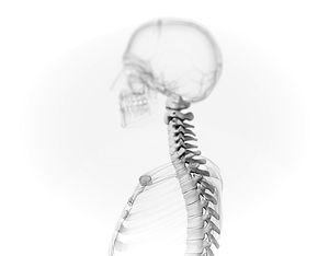 Spine-3D-Model_edited_edited.jpg