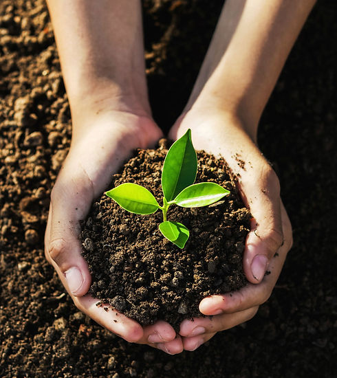 hand with compost seeding.jpg