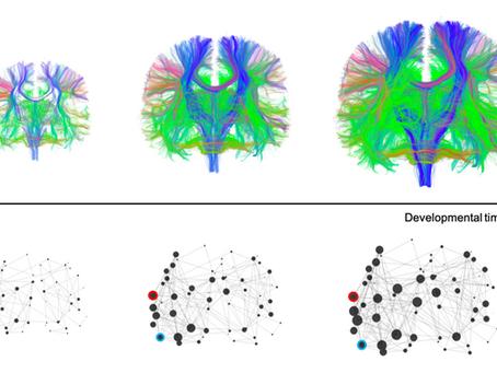 Simulating neurodiversity in the brain using simple computational models