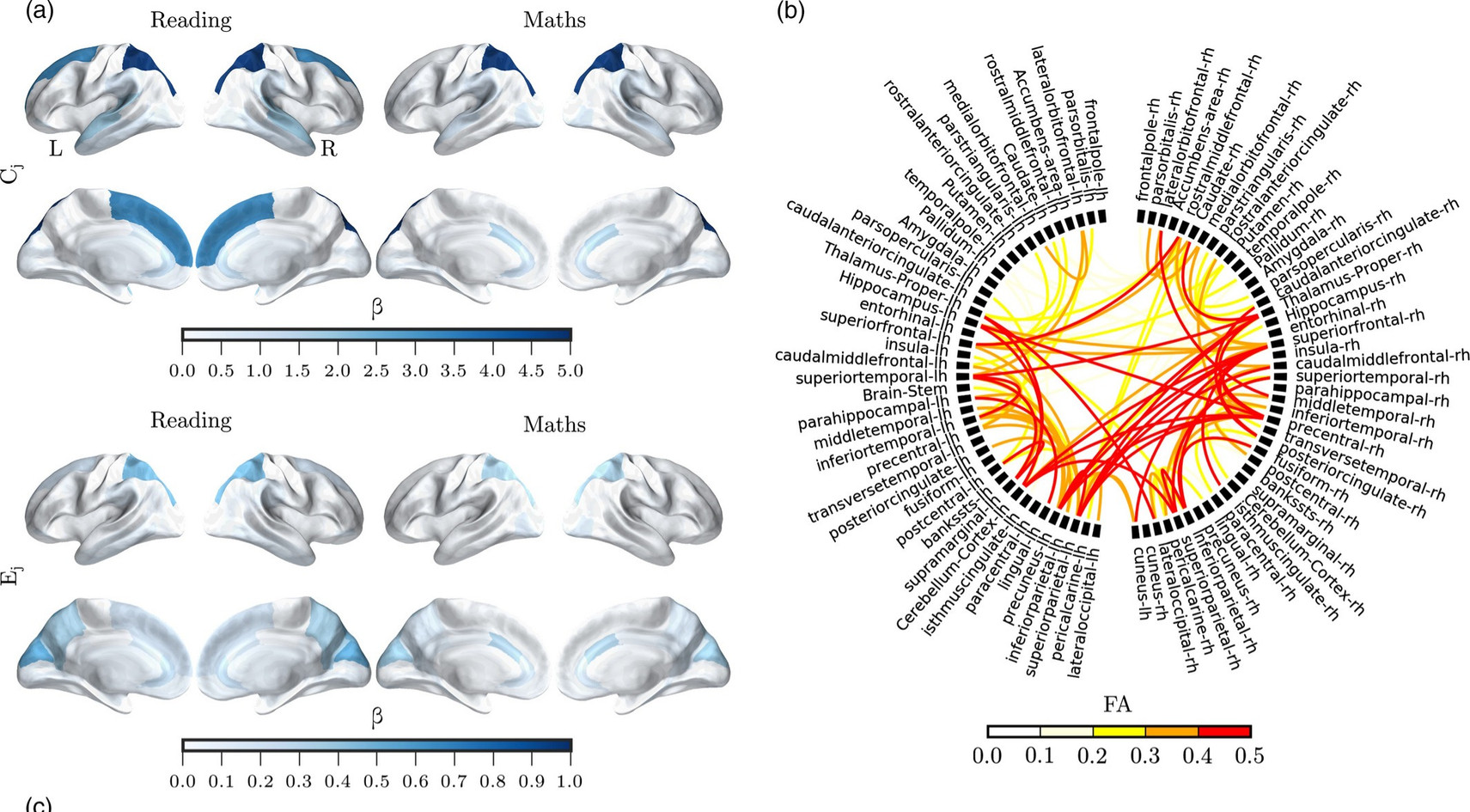 Children's academic attainment is linked to the global organization of the white matter connectome.  Bathelt, Gathercole, Butterfield,  the CALM team & Astle.  Developmental Science