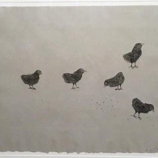 Little chicks, 1998