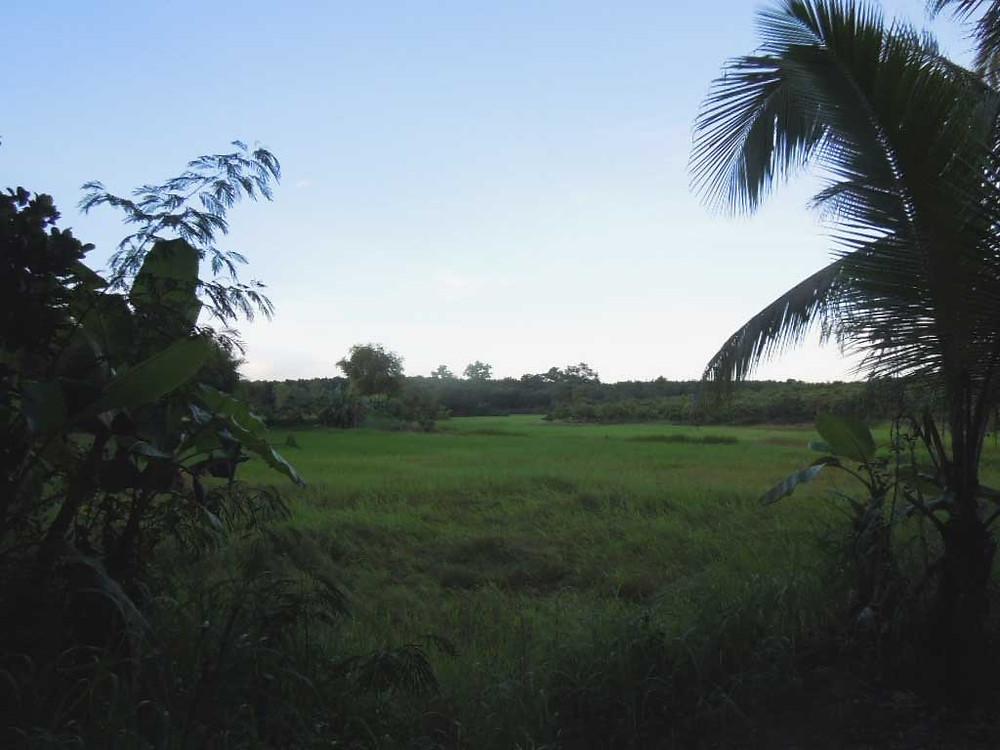 タイ東部 タイの田舎