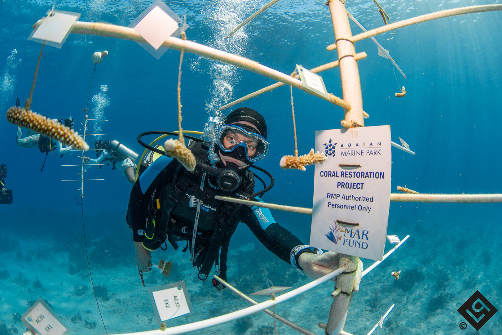 Coral Restoration RMP