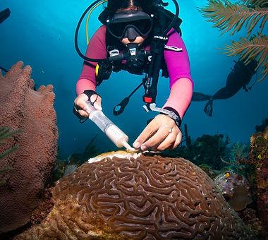 0120_coral disease.jpg