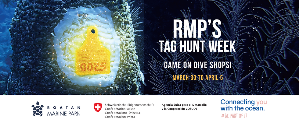 Tag Hunt 190321-04.png