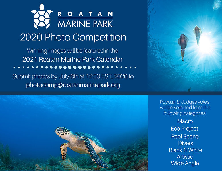 2020-Photo-Competition.jpg