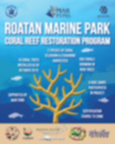 Coral Restoration Graphic.png